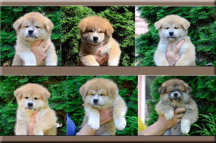 2014 puppy collage